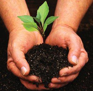 إزرع شجرة في حديقة بيتك أو في حديقة الحي الذي تسكن فيه