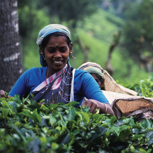 استمتع بشرب شاي مشترى بالتجارة العادلة